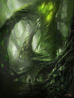Deep In Heart Of Emerald Forest >> Emerald Oak